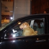 20080829_dogdriver_P8290805